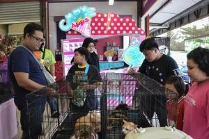 Lucky Kitties Receive New Love